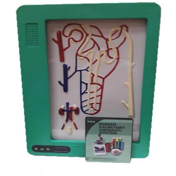 DJT - Maket Elektrik Sistem Urin Manusia